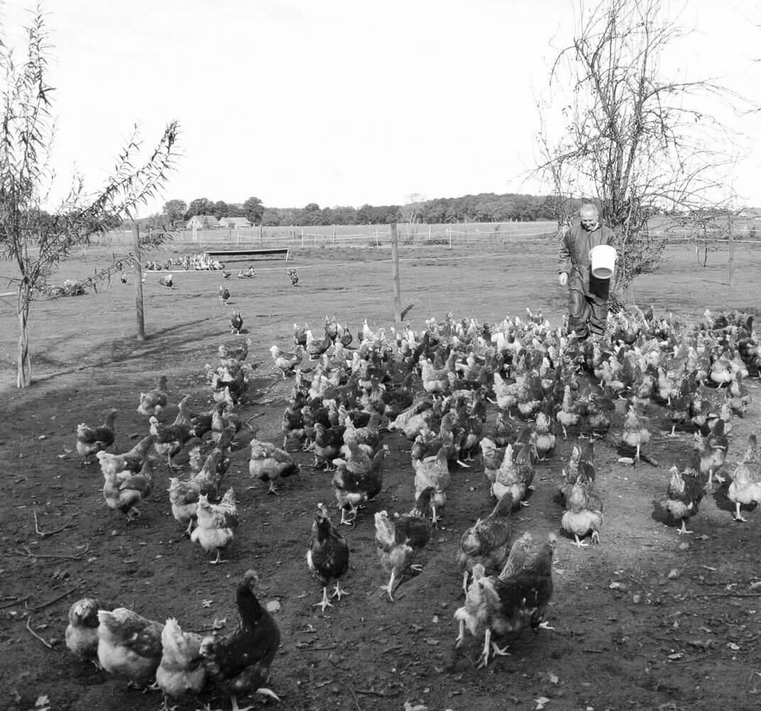 Aufzucht unserer Hähnchen