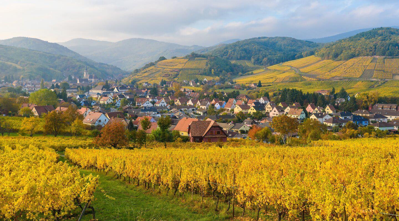 Weinberge im Elsass, Frankreich